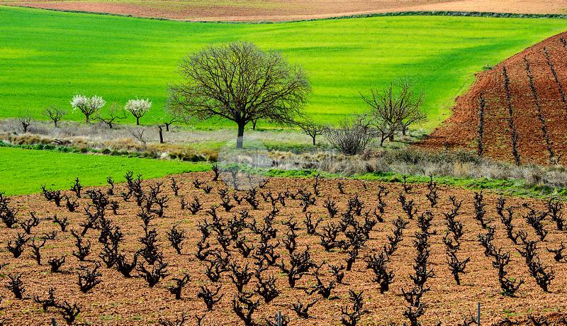 Viñedos. Hontecillas. Cuenca. España. ©ANTONIO REAL HURTADO / PILAR REVILLA