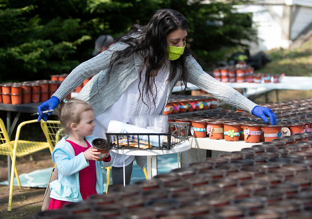 """HARWICH - Sarah Dennis, an off-duty CNA, plants marigold and alyssum seeds with a little help from her 2-year-old daughter Maggie, Thursday, April 16, 2020. In just a week she went from a couple hundred pots to a couple thousand that will be delivered to seniors. """"We want them to know that they're not forgotten and we're thinking of them right now,"""" Dennis said of her initiative. Photo by Christine Hochkeppel"""
