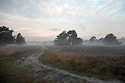 ground fog on heath at dawn Holland, Noord Brabant