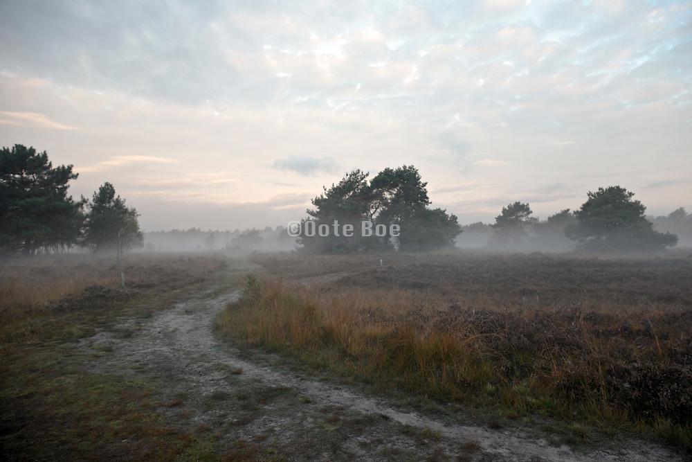 ground fog on heath at dawn Holland, Noord Brabant