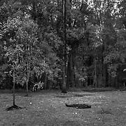 At the Arboretum park in Nairobi