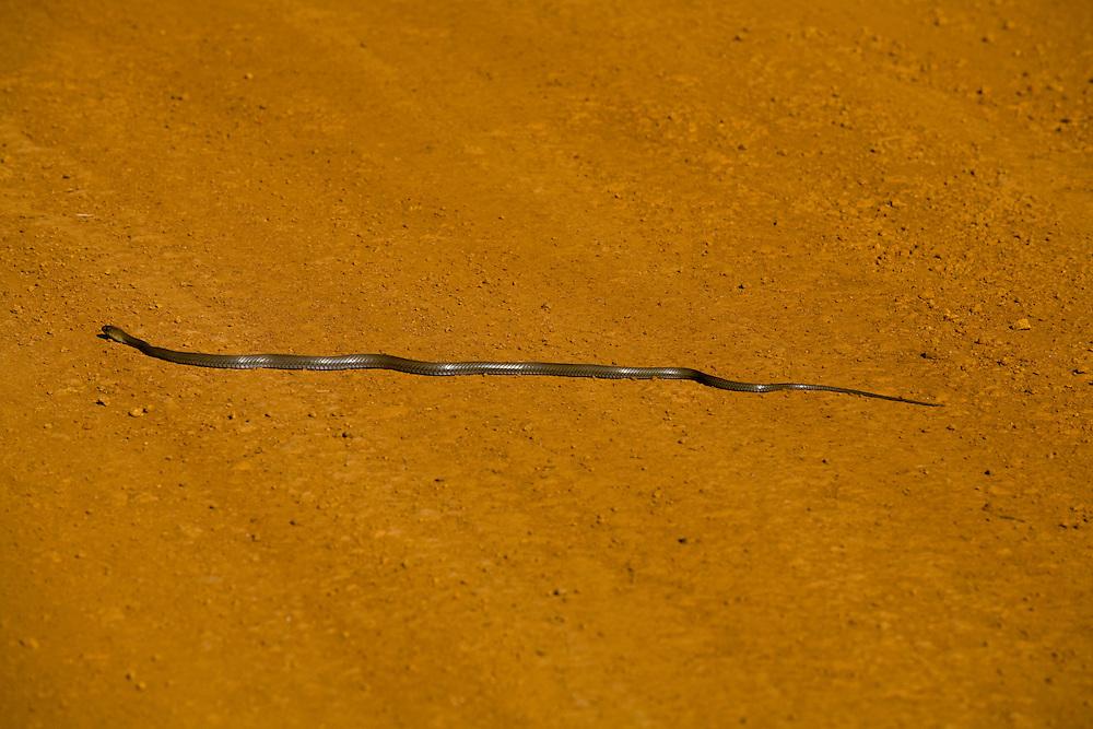 Sao Roque de Minas_MG, Brasil...Rio Sao Francisco no Parque Nacional Serra da Canastra em Sao Roque de Minas, Minas Gerais. Na foto uma cobra...The Sao Francisco river in the Serra da Canastra National Park in Sao Roque de Minas, Minas Gerais. In this photo a snake...Foto: LEO DRUMOND / NITRO
