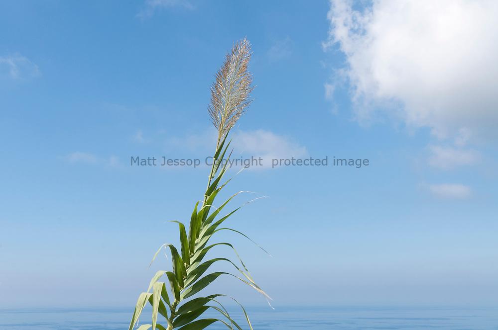 Mediterranean grass on blue