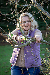 Removing a branch of an apple tree with a pruning saw.