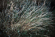 long wild grasses close up