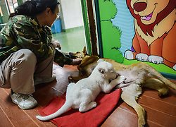 61406137<br /> A two-month-old white lion is fed by a dog at a wildlife park in Hangzhou, capital of east China s Zhejiang Province, April 21, 2014. The white lion cub was born in Hangzhou in February. As its mother refused to feed the cub, a dog was brought here by staff members as its wet nurse,  Monday, 21st April 2014. Picture by  imago / i-Images<br /> UK ONLY