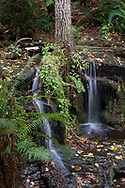 A small pair of waterfalls surround a tree trunk in Dianne Brook.  Photographed on the slopes of Sumas Mountain in Abbotsford, British Columbia, Canada
