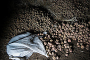 A canvas sac overflows with piles of small potatoes stored in a small, dark hut in the alpaca herding village of the Q'eros people in the Cordillera de Paucartambo, Andes Mountains, Peru. The Q'eros, a Quecha people living in the Peruvian Andes, are considered the last direct descendants of the Incas and proudly maintain many of their ancient traditions.