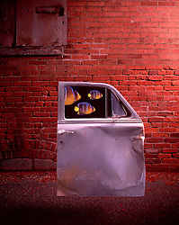 Car door with tropical fish in window against red brick wall. CONCEPT STOCK PHOTOS CONCEPT STOCK PHOTOS
