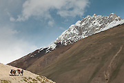 A horse caravan. Trekking up and along the Wakhan river, the only way to reach the high altitude Little Pamir plateau, home of the Afghan Kyrgyz community.