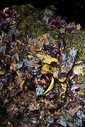Detail of organic vegetable and fruit matter decomposing inside a home garden composting bin.