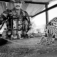 A FARC rebel fighter and his mascot; a wildcat, at a checkpoint in Caqueta, Colombia.