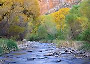 Fall color in Aravaipa Canyon