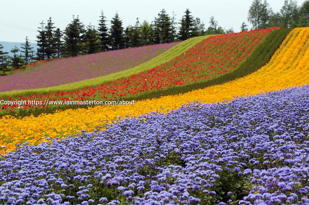Field of colourful flowers in Furano Hokkaido Japan