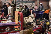 Locals shop at the weekly market at Qurna, a village on the West Bank of Luxor, Nile Valley, Egypt. As a man rides his mule through the crowd, other marketeers and stallholders make for a late-morning bustle. Amidst the bustle of this busy regular event, people from many miles around have come to trade and buy their provisions.