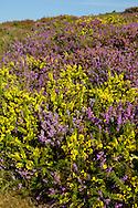 Dorset Heathland