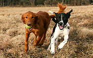 Doc and Twin Cities cousin Clyde having fun at the Nine Springs Dog Park on Christmas Day, 2014.