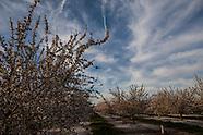 Fresno County Blossoms