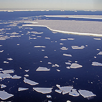 Large ice floes drift past the edge of a land-fast ice shelf.