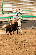 Will James Roundup, Ranch Rodeo, Working Ranch Horse, Hardin, Montana, Tom Curtin, MODEL RELEASED, PROPERTY RELEASED.