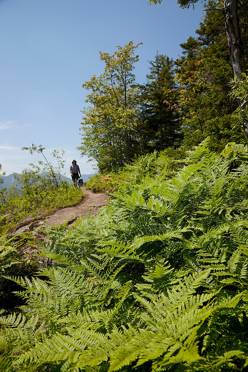 Ferns on mountaintop with hiker and dog in the distance