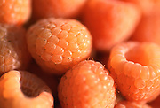 Close up selective focus photograph of a group of Golden Raspberries