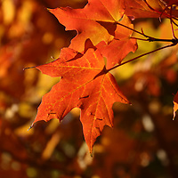 """""""My Happy Days"""" <br /> <br /> These beautiful autumn days are surely some of my happy days with their colorful and vibrant fall foliage!"""