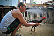 A Vietnamese man squats on the ground holding his fighting rooster and spits water, Khanh Hoa Province, Vietnam, Southeast Asia