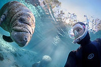 A rare photograph of myself, Carol Grant, underwater with an interested manatee taken in February 2017. I'm almost always on the other side of the viewfinder! I turned the dome port around for this shot of a manatee investigating. Being very curious creatures they investigate their environment while comfortably floating in the clear blue spring water lit by the sun's rainbows. This is a peek at an undisturbed, natural behavior while this manatee winters in the freshwater springs. Florida manatee, Trichechus manatus latirostris, a subspecies of the West Indian manatee, endangered. Three Sisters Springs, Crystal River National Wildlife Refuge, Kings Bay, Crystal River, Citrus County, Florida USA. IUCN Red List: Endangered. USFWS implemented downlisting to Threatened 2017: http://www.iucnredlist.org/details/22106/0.