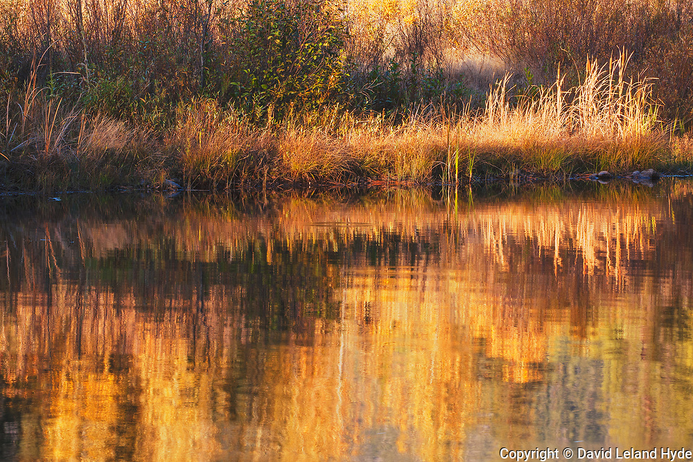 Shore, Magic Light, Indian Creek, Heart K Ranch, Genesee Valley, California Mountains, Fall Color, Fall Leaves, Fall Grasses, Reflections Pool, Tuft Grass, Cool Water Pools