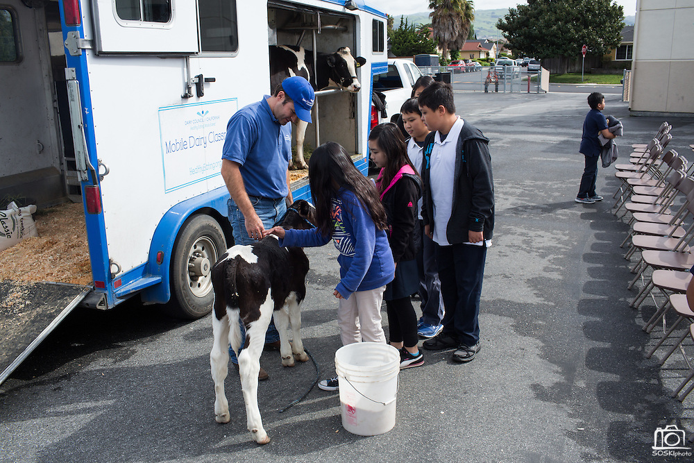 Dairy Council of California Instructor Brandon Roberts lets students pet one-month-old calf Rocky during the Mobile Dairy Classroom visit at Zanker Elementary School in Milpitas, California, on March 14, 2016. (Stan Olszewski/SOSKIphoto)