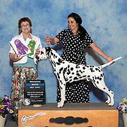 Greater Denver Dalmatian Club 2019