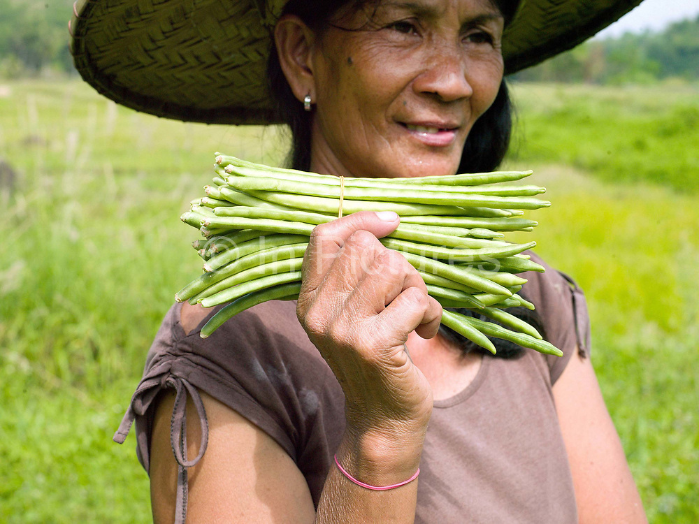 Teodora Ayson holds freshly picked green beans from her garden in Pamantingan, Esperanza, Sultan Kudarat province, The Philippines. Teodora and her husband Geronio have half an acre of vegetable gardens. They inter-crop a huge variety of vegetables including cucumber, green beans, peppers, loofah, green chilli, eggplant, squash and banana. They learnt about inter-cropping and making organic fertiliser at Oxfam's Climate Resiliency Field Schools.