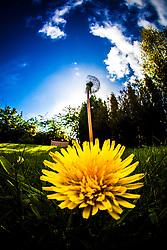 Flowers in the Dennyloanhead sunlight..©Michael Schofield..
