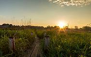 Sunrise from the boardwalk in Curtis Prairie, UW-Madison Arboretum. Photo take May 31, 2018.
