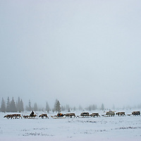 North of the Arctic Circle in Russia, a Komi reindeer-herding clan travels across the tundra through heavy whiteout fog that makes navigation difficult.