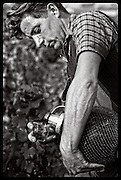 vineyard worker, Beaujolais, France