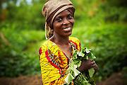 Mwanaidi Ramadhani holds sweet potato plantlets in the village of Mwazonge, roughly 30km southwest of Mwanza, Tanzania on Sunday December 13, 2009..