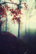 Dreamy and misty November morning at sunrise