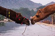 Pushkar Camelot