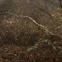 a bit of undergrowth