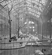 9969-C38  Chicago, January 1952