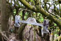 A hanger of the type used for lingerie dangles from a branch at a dogging spot - a place where people meet to have sex with strangers, just off the A26 at Eridge near Tonbridge Wells in Kent. March 27 2019.