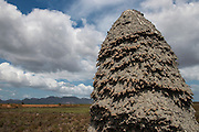 Termite Mound<br /> Savanna <br /> Rupununi<br /> GUYANA<br /> South America