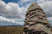 Termite Mound<br /> Savanna <br /> Rupununi<br /> GUYANA<br /> South America