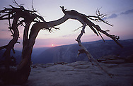 The lone Jeffrey Pine on Sentinel Dome at sunset, with a view of El Capitan in Yosemite National Park, California.