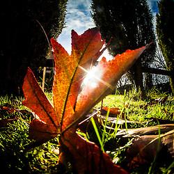 Afternoon leaves