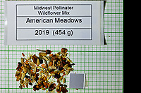 Midwest Pollinator Wildflower Mix seeds from American Meadows. Image taken with a Fuji X-H1 camera and 80 mm f/2.8 macro lens + 1.4x teleconverter