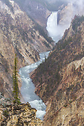 Lower Falls of the Yellowstone on a foggy day from Artist Point