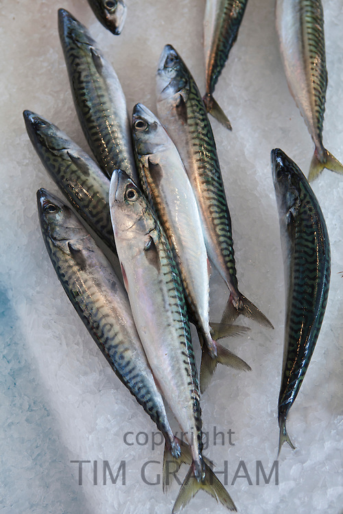 Freshly-caught mackerel fish on sale at food market at La Reole in the Bordeaux region of France